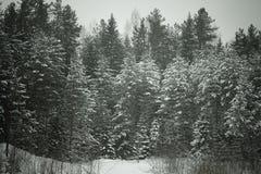 Χιονώδης χειμώνας στο δάσος που τονίζεται Στοκ Φωτογραφίες