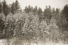 Χιονώδης χειμώνας στο δάσος που τονίζεται Στοκ φωτογραφία με δικαίωμα ελεύθερης χρήσης