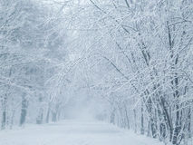 χιονώδης χειμώνας δέντρων πάρκων φύσης Ιανουαρίου παγετού ημέρας Στοκ Εικόνα