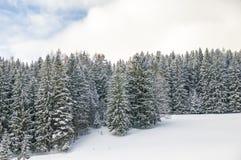 Χιονώδη άσπρα πεύκα Στοκ Φωτογραφίες