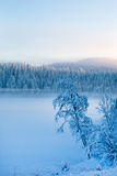 Χιονώδη δέντρα πεύκων με την ομίχλη σε ένα χειμερινό τοπίο Στοκ Εικόνες