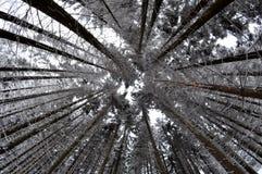 Χιονώδη δέντρα Στοκ φωτογραφία με δικαίωμα ελεύθερης χρήσης