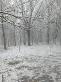 Χιονώδη ξύλα Στοκ φωτογραφία με δικαίωμα ελεύθερης χρήσης