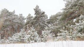 Χιονώδη χειμερινά δασικά Χριστούγεννα Στοκ εικόνα με δικαίωμα ελεύθερης χρήσης