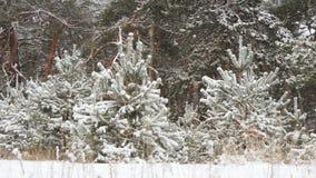 Χιονώδη χειμερινά δασικά Χριστούγεννα Στοκ Εικόνες