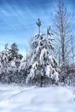 Χιονώδη χριστουγεννιάτικα δέντρα και άσπρο δάσος Στοκ εικόνα με δικαίωμα ελεύθερης χρήσης