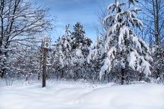 Χιονώδη χριστουγεννιάτικα δέντρα Στοκ Φωτογραφίες