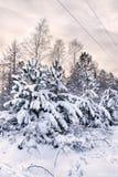 Χιονώδη χριστουγεννιάτικα δέντρα Στοκ φωτογραφία με δικαίωμα ελεύθερης χρήσης
