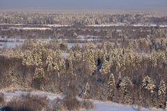 Χιονώδη spruses Στοκ Φωτογραφία