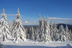 χιόνι έλατων κάτω από το χειμώ Στοκ Φωτογραφίες