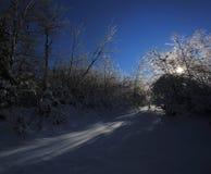 Χιόνι δέντρων πάγου Backlight Στοκ Εικόνες