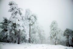 Χιόνι έξω Στοκ Εικόνες