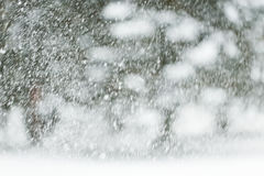 Χιόνι ή χιονοπτώσεις Στοκ Φωτογραφίες