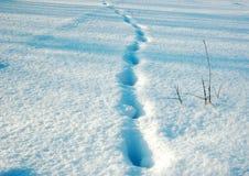 χιόνι ανασκόπησης Στοκ Εικόνες
