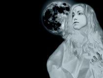 χιόνι βασίλισσας μεσάνυχτων Στοκ εικόνες με δικαίωμα ελεύθερης χρήσης