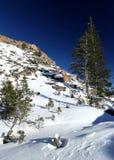 Χιόνι βουνών με τα δέντρα πεύκων στοκ φωτογραφία