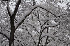 Χιόνι δέντρων στην οδό στοκ εικόνα