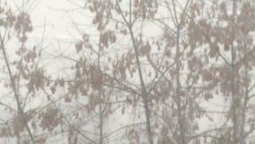 Χιόνι και δέντρα στη Ρωσία απόθεμα βίντεο