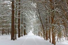 Χιόνι και καλυμμένα πάγος χειμερινά δέντρα Στοκ φωτογραφία με δικαίωμα ελεύθερης χρήσης