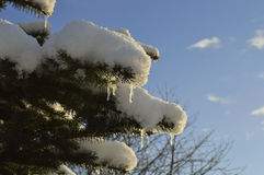 Χιόνι και παγάκια Στοκ εικόνες με δικαίωμα ελεύθερης χρήσης