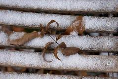 Χιόνι και φύλλα στο ξύλο Στοκ Φωτογραφίες