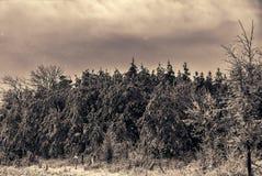 Χιόνι καλυμμένο στο πάγος δασικό τοπίο στοκ εικόνα