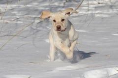 χιόνι κουταβιών Στοκ φωτογραφία με δικαίωμα ελεύθερης χρήσης