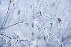 χιόνι κρυστάλλων Στοκ Εικόνες