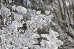 χιόνι λουλουδιών Στοκ Εικόνες