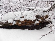 χιόνι μανιταριών κάτω Στοκ Εικόνα