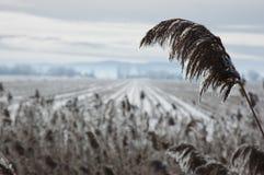 χιόνι πεδίων Στοκ Εικόνες