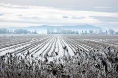 χιόνι πεδίων Στοκ φωτογραφίες με δικαίωμα ελεύθερης χρήσης