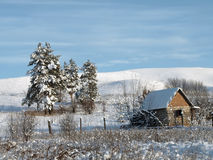 χιόνι πεύκων κάτω Στοκ φωτογραφίες με δικαίωμα ελεύθερης χρήσης