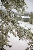 χιόνι πεύκων κλάδων κάτω Στοκ φωτογραφίες με δικαίωμα ελεύθερης χρήσης