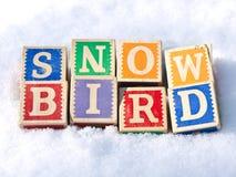 χιόνι πουλιών Στοκ Φωτογραφίες