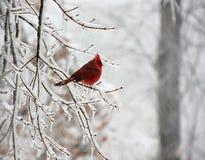 χιόνι πουλιών στοκ εικόνα