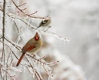 χιόνι πουλιών στοκ φωτογραφία με δικαίωμα ελεύθερης χρήσης