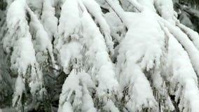 Χιόνι που αποτυγχάνει στο δέντρο απόθεμα βίντεο
