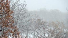 Χιόνι που αφορά δέντρα απόθεμα βίντεο