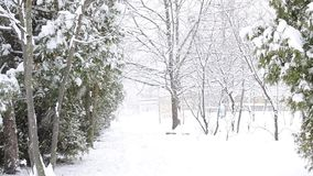 Χιόνι που αφορά διαγώνια το άσπρο χιονώδες υπόβαθρο με τα δέντρα thuja στο αριστερό απόθεμα βίντεο