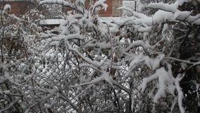 Χιόνι που αφορά τους κλάδους δέντρων φιλμ μικρού μήκους