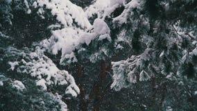 Χιόνι που εμπίπτει στο δάσος χειμερινών πεύκων με τα χιονώδη χριστουγεννιάτικα δέντρα κίνηση αργή απόθεμα βίντεο