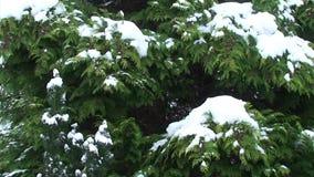 Χιόνι που πέφτει από το δέντρο απόθεμα βίντεο