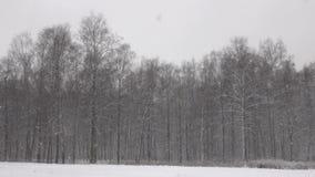 Χιόνι που πέφτει μπροστά από το δάσος φιλμ μικρού μήκους