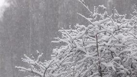 Χιόνι που πέφτει μπροστά από το δάσος απόθεμα βίντεο