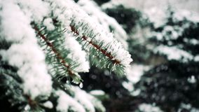 Χιόνι που πέφτει στα δέντρα έλατου απόθεμα βίντεο