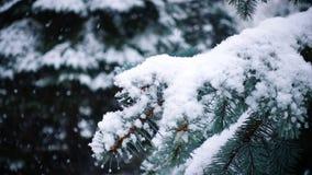 Χιόνι που πέφτει στους κλάδους δέντρων έλατου απόθεμα βίντεο