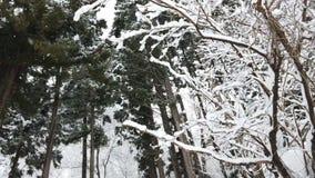 Χιόνι που πέφτει στο δάσος το χειμώνα απόθεμα βίντεο