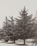 Χιόνι πρωινού Στοκ εικόνα με δικαίωμα ελεύθερης χρήσης