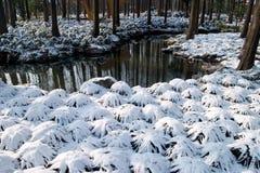 χιόνι πτώσης westlake Στοκ Εικόνες